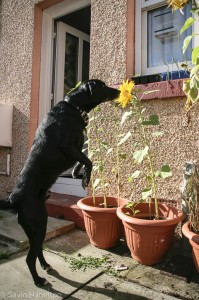 My dog was a rescue from Dogs Trust West Calder