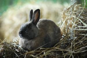 Rescued rabbit
